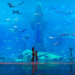 Atlantis the palm hotel big aquarium