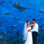 Atlantis the palm hotel just married