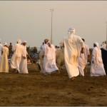 арабские бычьи бои