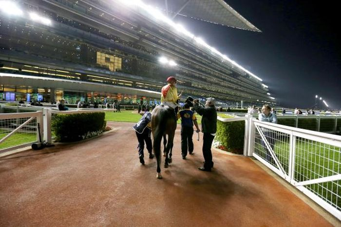 dubai world cup meydan 2014
