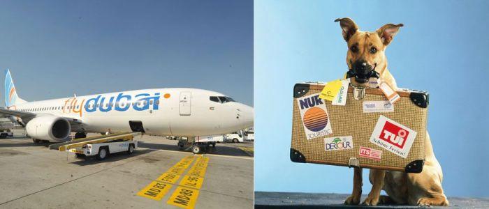 FlyDubai  перевозки животных
